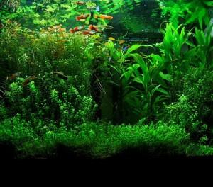 Aquarium aves des algues
