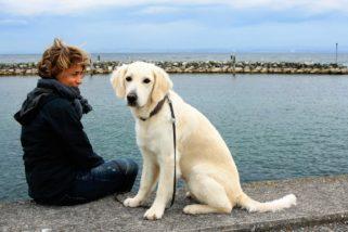 Quelques conseils pour avoir un chien bien obéissant