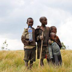 La déforestation et la pauvreté