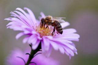Tout savoir sur la fabrication du miel